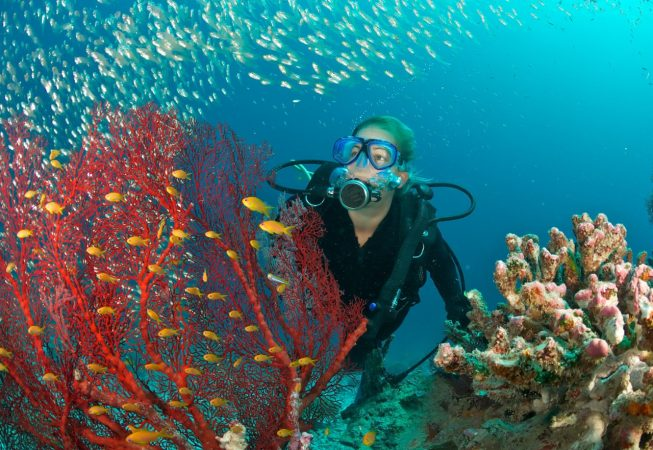 female scuba diver admires underwater scene including a shoal of fish and a red fan coral